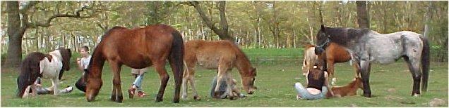 Kindergruppe in der Pferdeherde